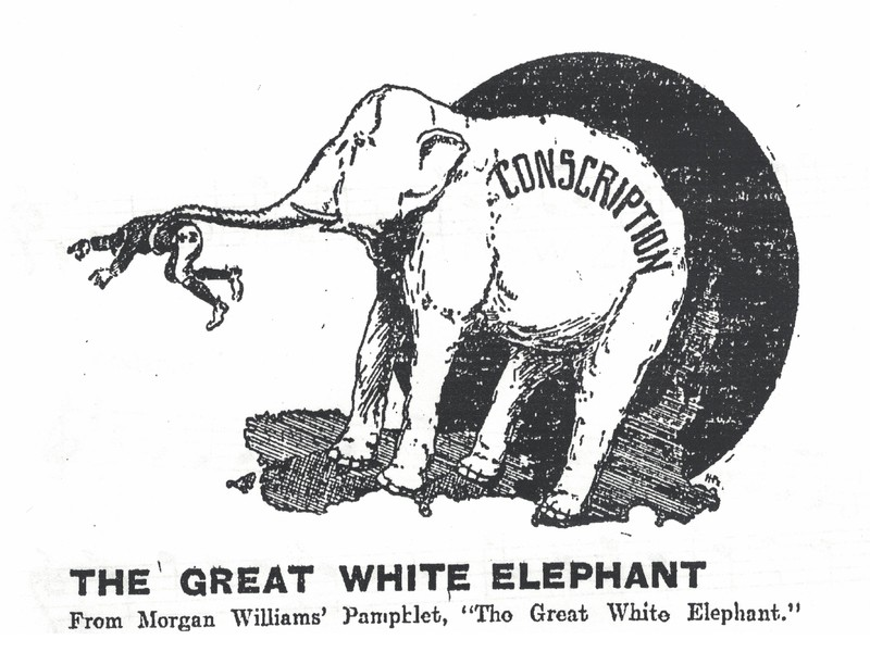 Great White Elephant cartoon cropped.jpg